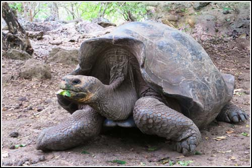 tortues galapagos